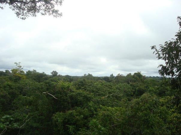 Amazonas10