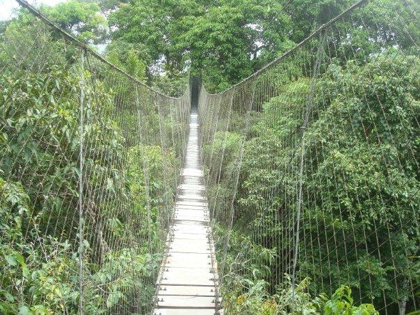 Amazonas20